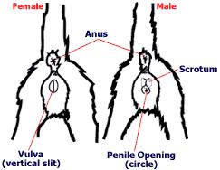 erkekdisikediayrimi2