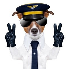 pilot captain dog with peace fingers and a blue tie
